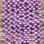 Pearl 4.5-5mm Potato Top Drilled, Flip Flop Dyed Lavender